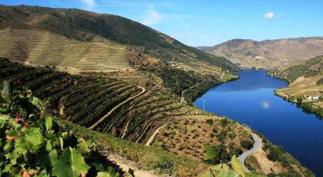 Porto vineyard Sogrape